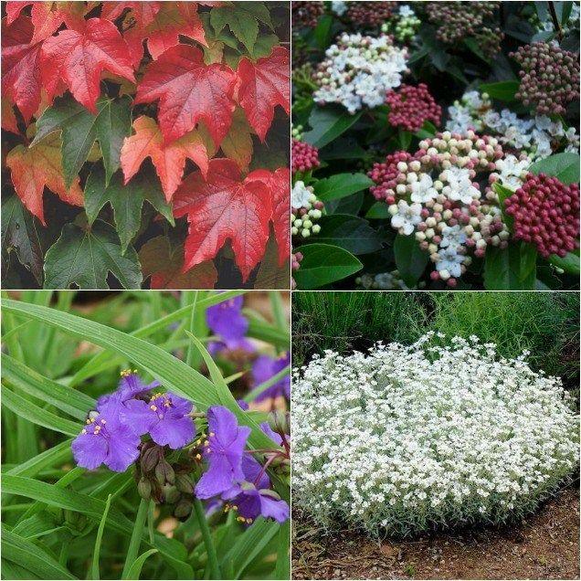 Piante Resistenti 8 Specie Ornamentali Da Coltivare Nel Giardino