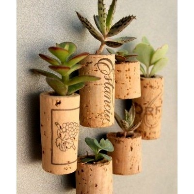 simply perfect  Hollow out a few wine corks for a simple small succulent garden. It will get more comments than you can image.