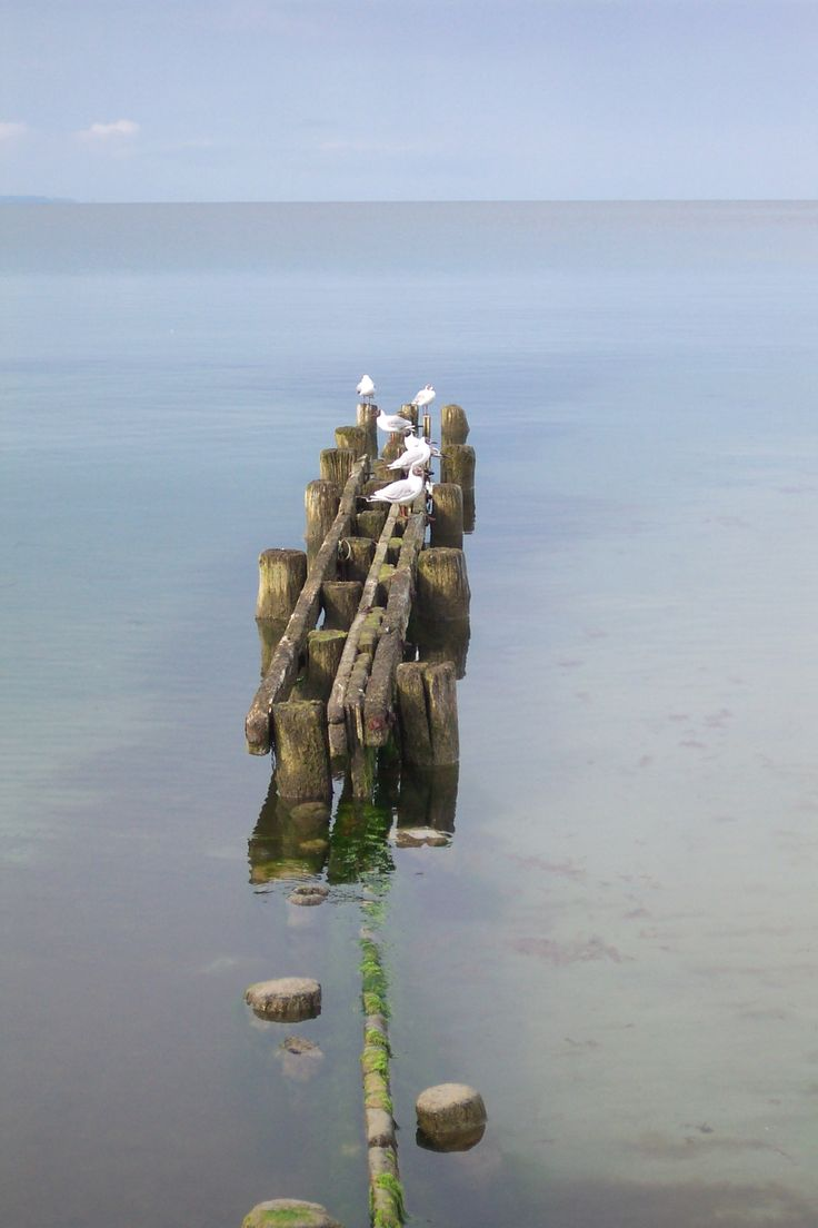 seagulls at the baltic sea in timmendorfer strand/niendorf | seehuus lifestyle hotel