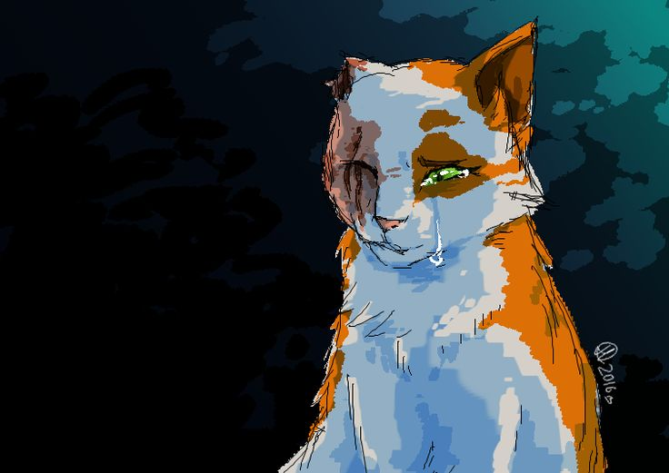 Brightheart by ColacatintheHat.deviantart.com on @DeviantArt