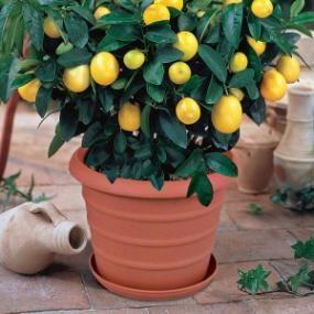 12 best creative uses for down under pots images on pinterest jars planters and pots. Black Bedroom Furniture Sets. Home Design Ideas
