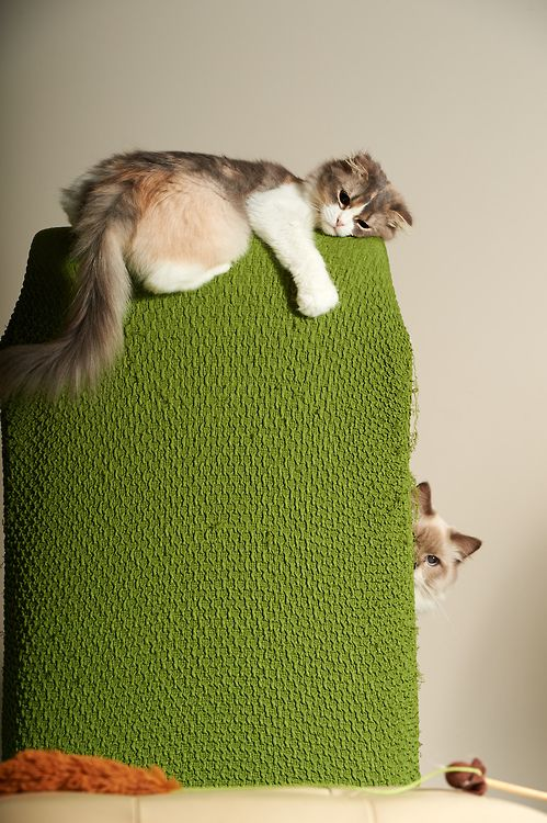 ...Meow, Chairs, Funny Cats, Happy, Cat Naps, Post Ideas, Kitty Spots, Scratch Post, Animal