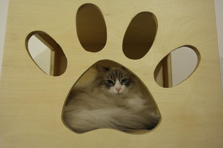 cubi per creare pareti attrezzate per gatti