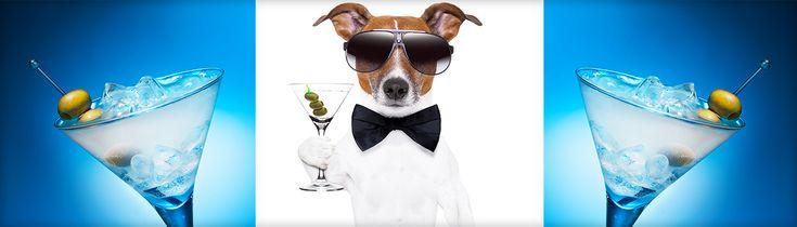 jack russelel honden afbeeldingen   Knockout VIPToday is National Vodka Day! - Knockout VIP