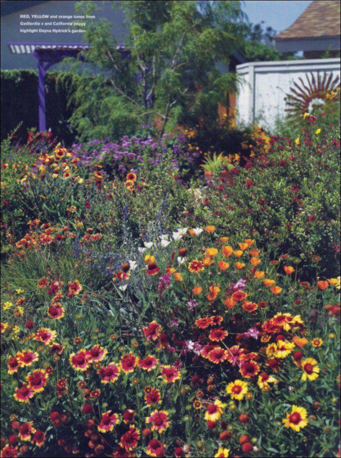drought tolerant succulent