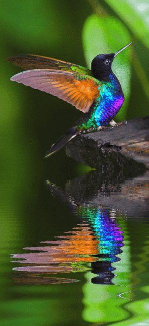 綺麗な鳥|おじゃかんばん『いろんな鳥の写真日記』