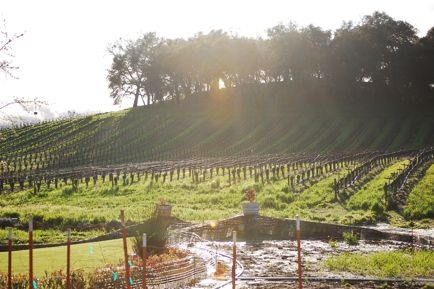 justin vineyards winery // paso robles