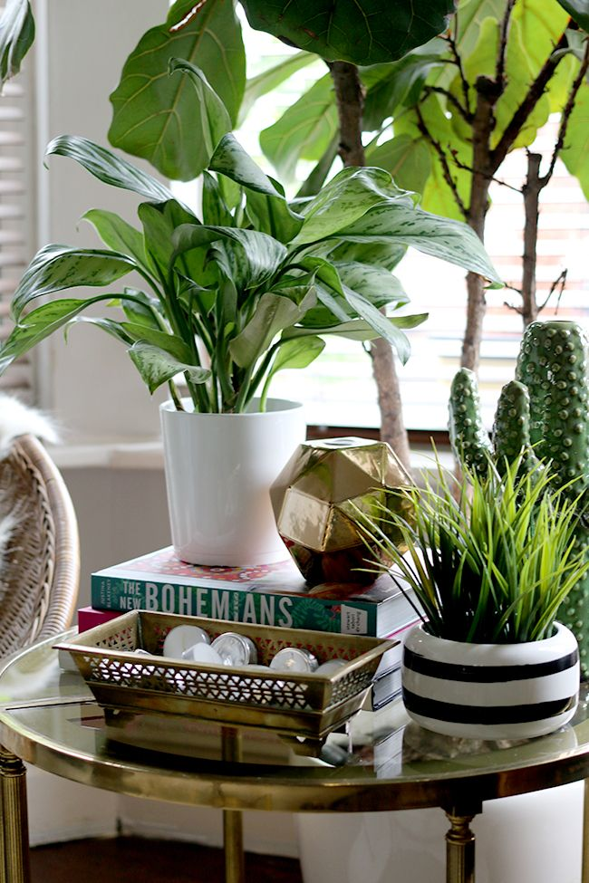 side table vignette styling with green plants and books