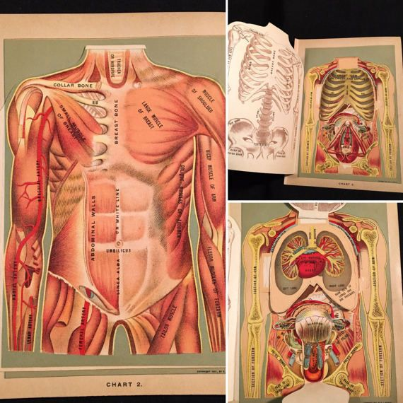 1901 Fold-Out Anatomy Model  The Human Body Antique Moveable