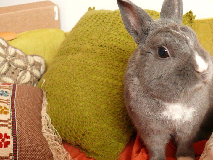 My lovely rabbit Kibong
