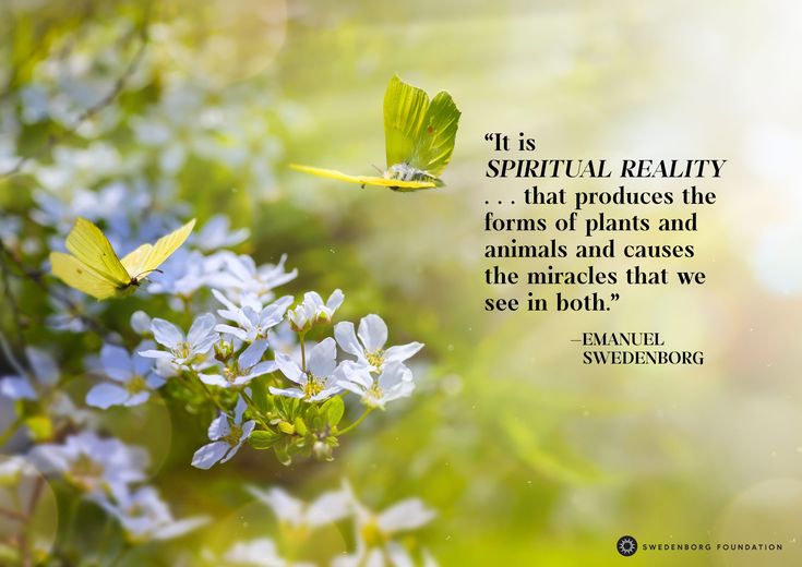 """""""It is spiritual reality . . . that produces the forms of plants and animals and causes the miracles that we see in both."""" —Emanuel Swedenborg, Divine Love and Wisdom §340  To learn more about this idea, check out our Swedenborg and Life episode, """"Do Ghosts Exist?"""" here: https://www.youtube.com/watch?v=M85ttx9Hzm0"""
