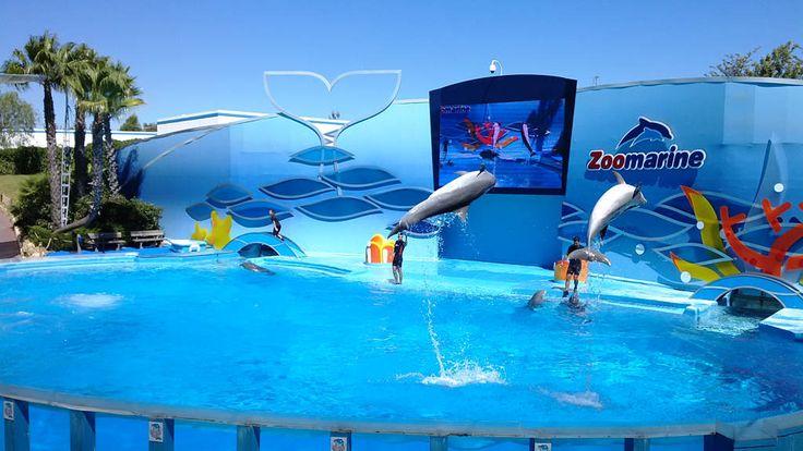 Zoomarine in Algarve dolfijnen