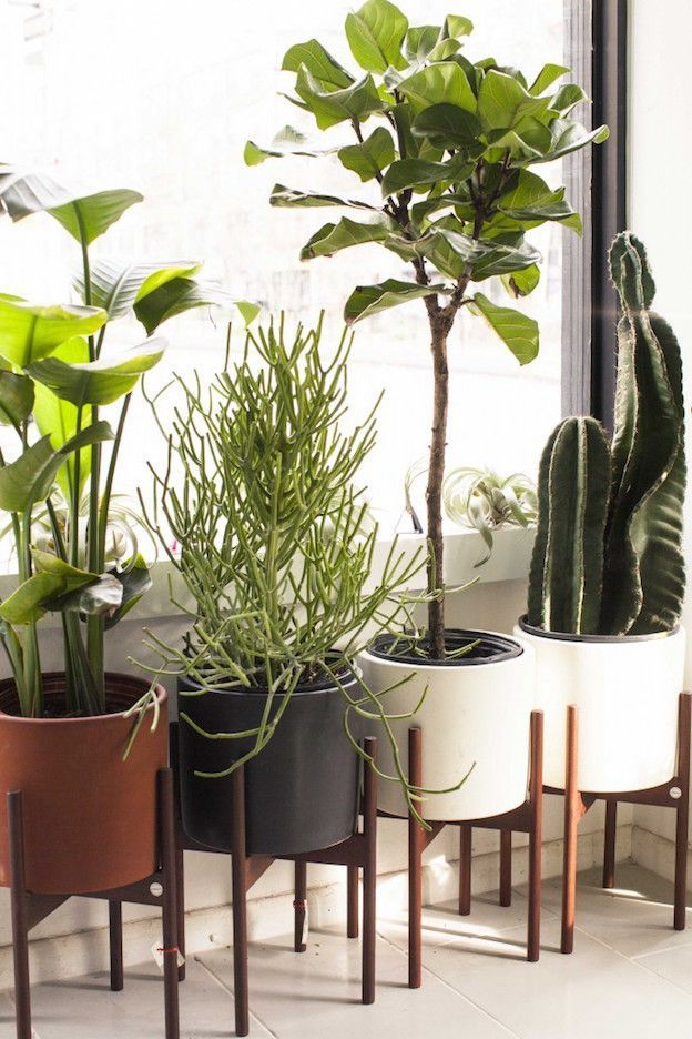 The Sill Founders Eliza Blank and Andrew Erdle Talk Their Start, Clients, Plants, and More: The Sill wants to bring keeping plants alive to everyone (plus clients like Google, Twitter, and Warby Parker). | http://Coveteur.com