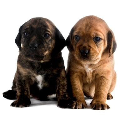 Why you should get a dog reason #5: Dogs Ease the Road to Recovery: Puppies Pals, Dogs Eas, Friends, Dogs Reasons, Dogs Why, Baby Pup, Puppy, Box, Health