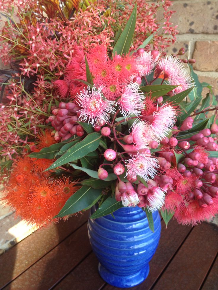 Australian native flowers from my brothers farm