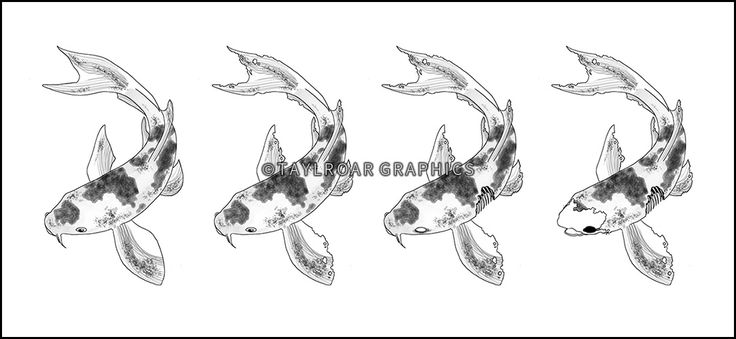 The stages of the zombie koi fish design.