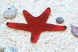 AquaCorals - Saltwater INVERTS - Anemones, SNAILS, STARFISH For Sale