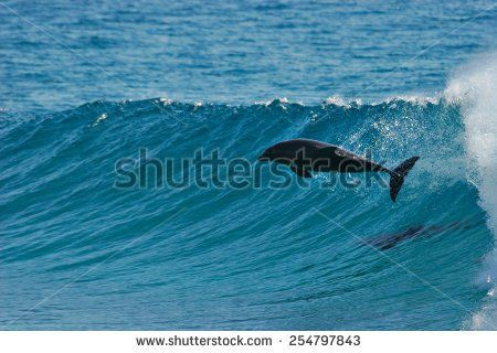 Image result for wave clip art dolphin