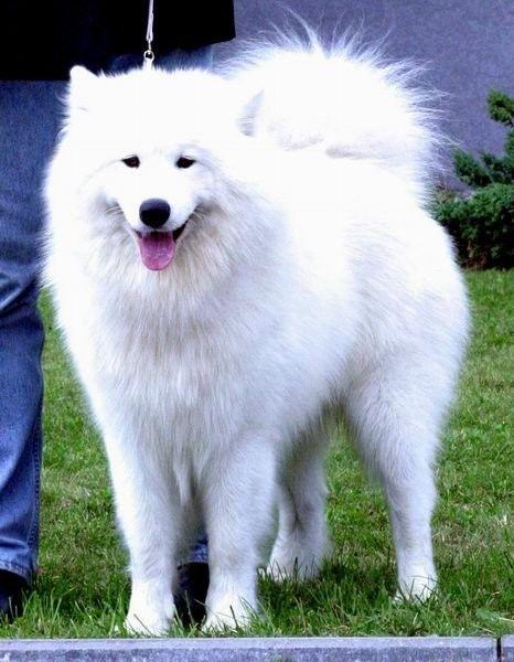 Sevimli Köpekler,Köpek Resimleri - Megaforum.COM - Forumun Bir Adım Ötesi