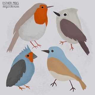 Some birdies. 🐦 #Birds #Robin ©EstherMols
