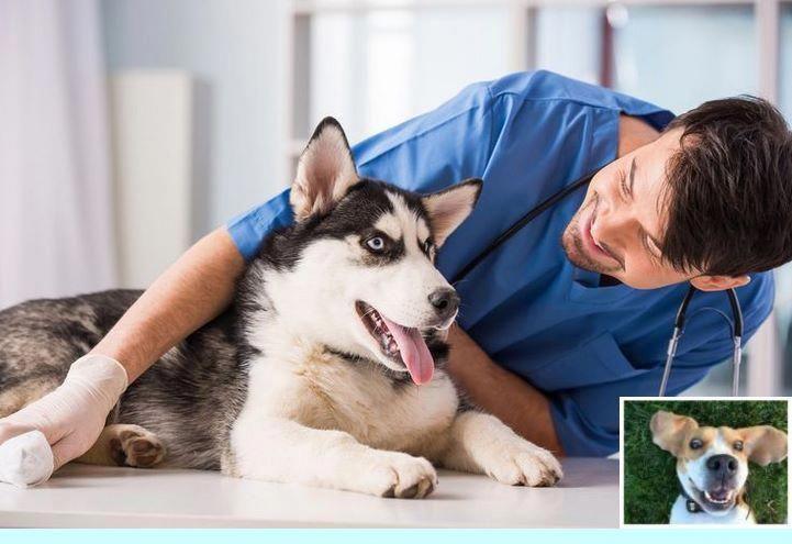Dogitchingremedies product id9767134544 dog training