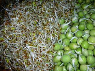 Η ΛΙΣΤΑ ΜΟΥ: Τι είναι τα φύτρα και πως τα φτιάχνουμε