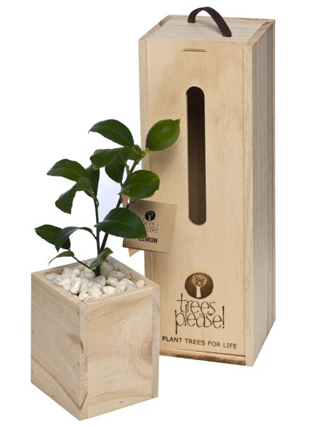 Perfect as corporate gifts - tree gifts by Trees Please!