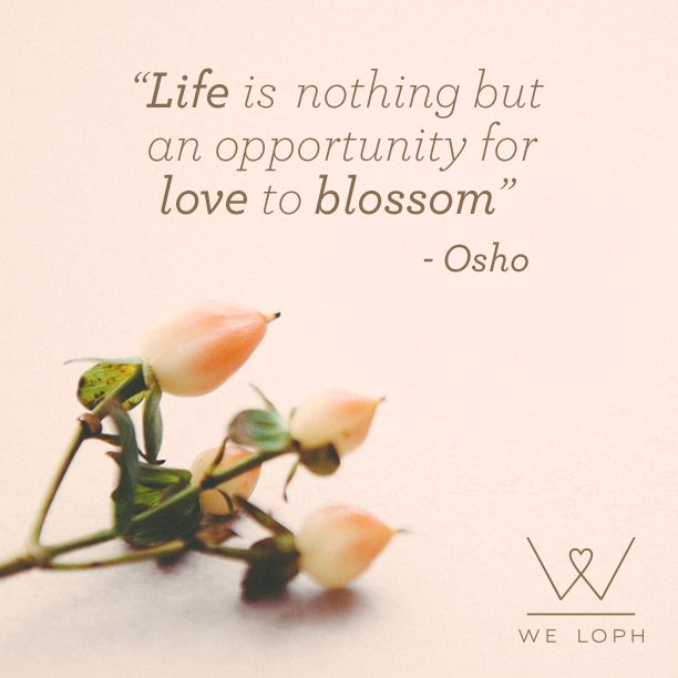 """Life is nothing but an opportunity for Love to Blossom"" - Osho #inspirationalquote #quotes #love #joy #lovequote #lovequotes #inspirational #enjoylife"