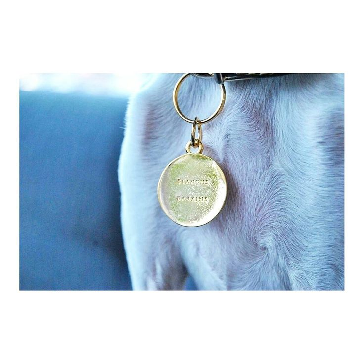Blanche Barkins pet charms  gold tag for cats & dogs collar