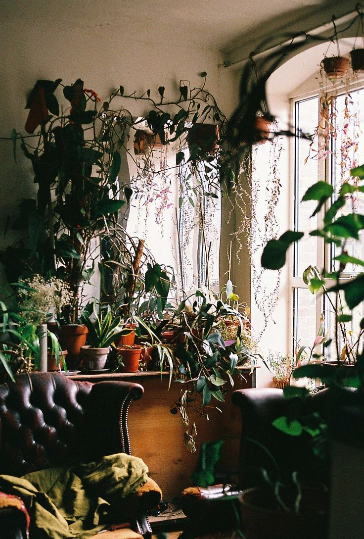 overgrown houseplants