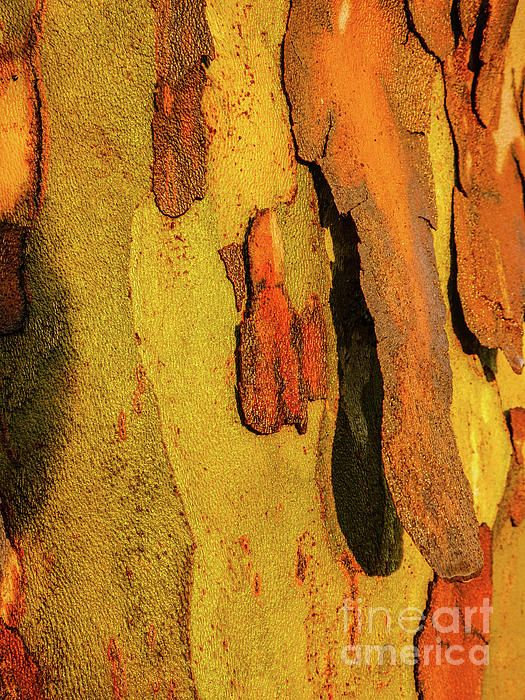 Peeling Tree Bark. green, mustard, brown.  Australian Tree Bark Series by Lexa Harpell. A collection of Aussie tree bark images. Taken from my travels around Australia. Add a splash of COLOUR and UNIQUE LOOK! Visit my photo gallery and get a beautiful Fine Art Print, Canvas Print, Metal or Acrylic Print OR Home Decor products. 30 days money back guarantee on every purchase so don't hesitate to add some AUSTRALIAN INTIMACY in your home.