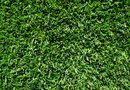When to Plant Zoysia Sod | Home Guides | SF Gate