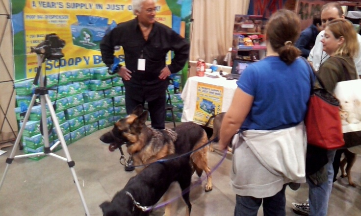 dogs at the show