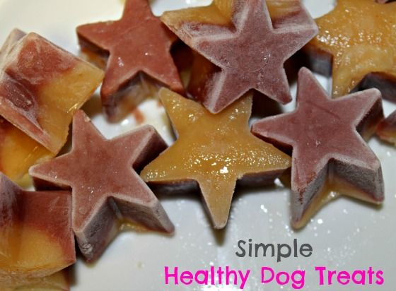 healthy fruit for dogs is coconut a fruit