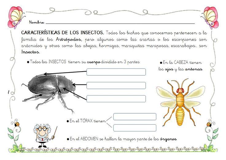 Características Insectos 5años