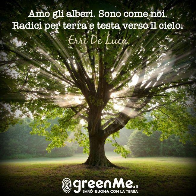 Amo gli alberi. Sono come noi. Radici per terra e testa verso il cielo. (Erri De Luca) http://www.greenme.it/