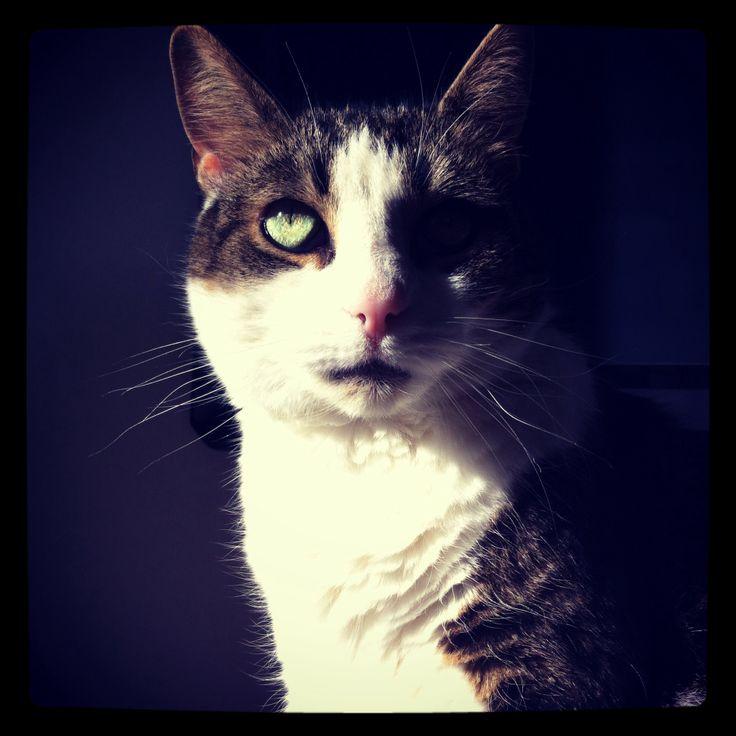 Min søsters kat - har de mest fantastiske øjne!