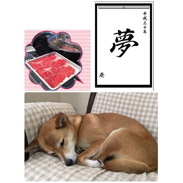 #初夢 #書き初めメーカー #犬 #愛犬 #柴犬ミックス #雑種 #元保護犬 #保護犬のわんこプロジェクト