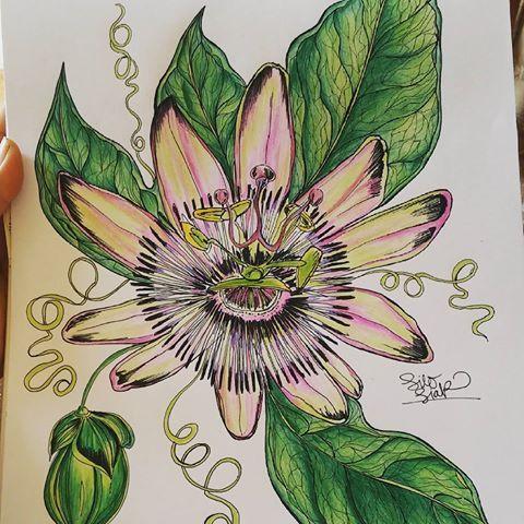 🍃🌻🌿✨ #passiflora #passionaria #ilustracionbotanica #organica #maracuya #flordemaracuya #draw #sketch #love #liloliar #verde💚 #line