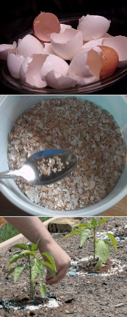 18 Sprinkle Crushed Eggshells Around Your Plants To Protect Them