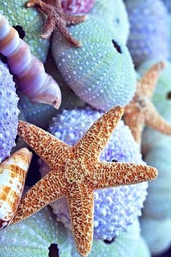 Os detalhes do mar me fascina... Dani Cabo