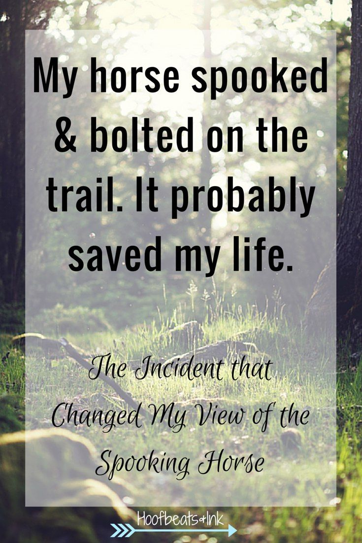 Pics photos quote i wrote for my horse com account s equestrian - Find This Pin And More On Horse Sense And Quotes