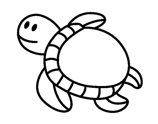 17 best images about tortue on pinterest animaux animal coloring pages and smart class - Coloriage tortue ...