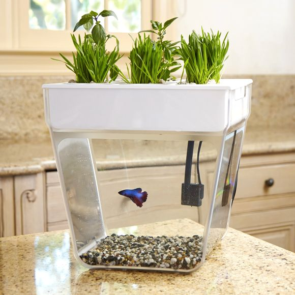 - Product Description - The Science Inside Bring the garden inside with a self-cleaning fish tank that grows food! The Water Garden (formerly the Aqua Farm) creates a closed-loop ecosystem—the fish fe