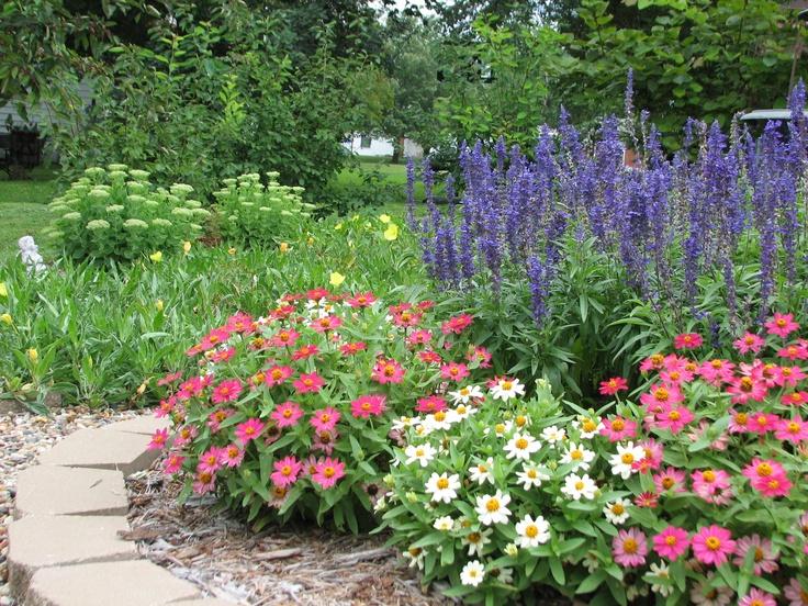 60 Best Zinnias Images On Pinterest Flowers Garden Cut