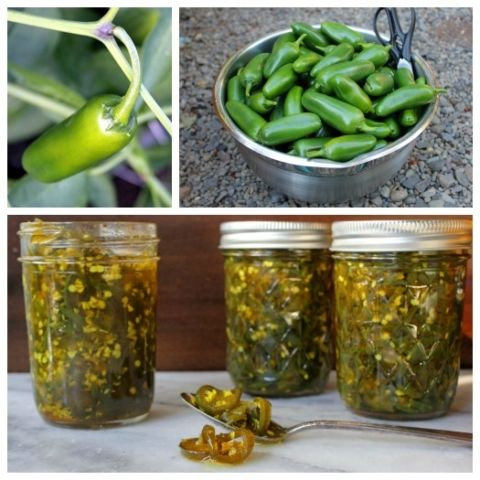 How to make candied jalapenos (recipe)