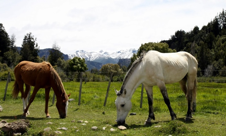 The pampas of Argentina and the gauchos and the wonderful estancias!  The Galvans own a beautiful historic estancia (ranch) and that's where the youngest daughter, Anabella, meets and falls in love with her handsome gaucho.
