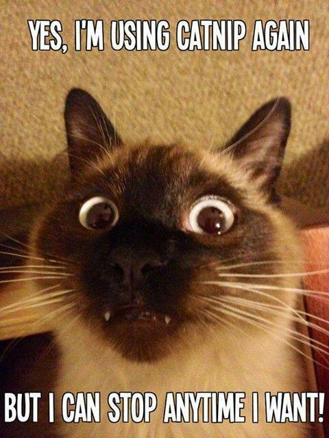 Friday Catblogging: Stoned « The Agonist