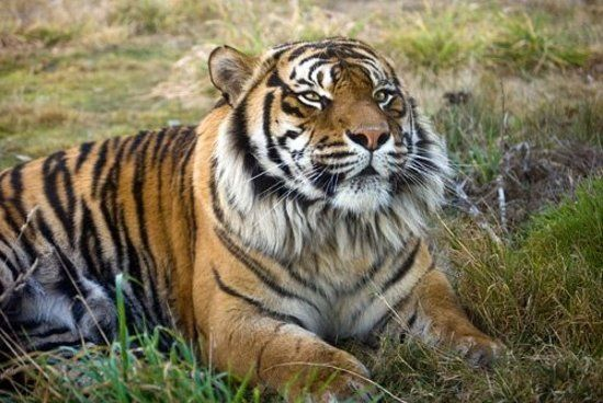 Photo of Orana Wildlife Park