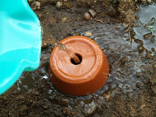 We've been doing this for several years and it works great.  We save the several gallons a day that run prior to getting hot water just for the ollas.Make your own ollas using terracotta pots.The Olla waters by seeping water through the unglazed pottery into the ground around the buried pottery.  Be sure to use food (or aquarium) safe glue.